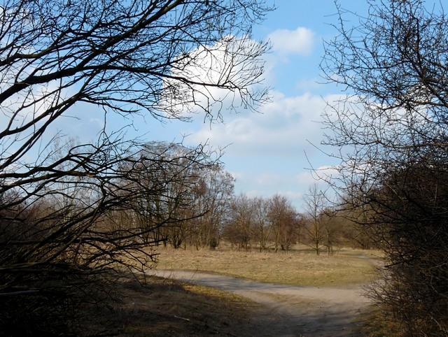 tereny Fortu Bielany