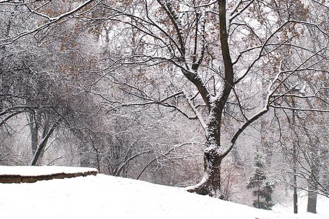 Park Krasińskich