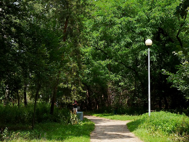 Park Lasek Brzozowy