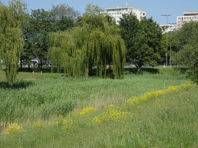 Bernardyńska Woda